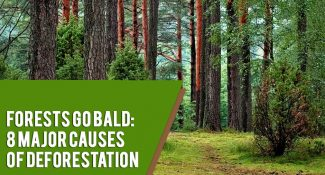 Forests Go Bald: 8 Major Causes of Deforestation